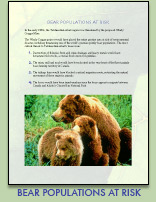Download PDF of Bear Populations At Risk
